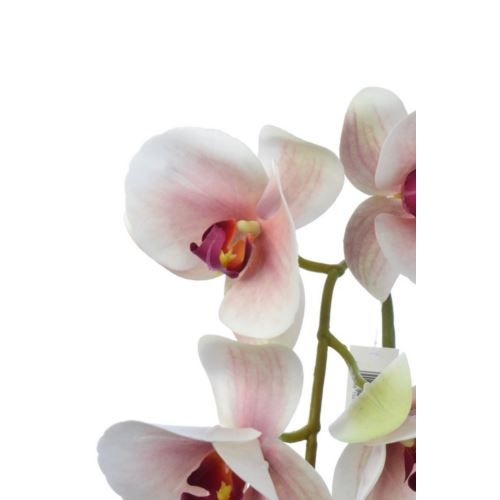 Orchid real touch 106 cm zb014 2