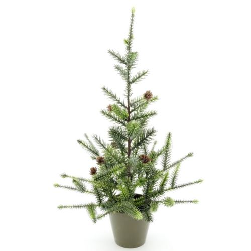 Pine tree W/Pot