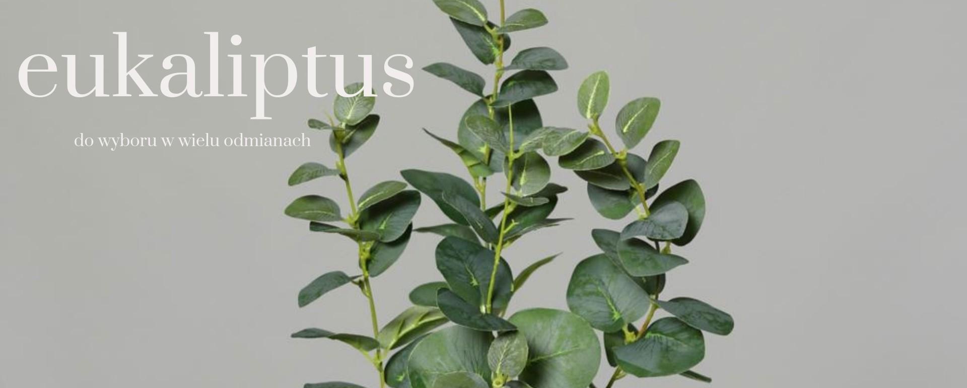 sztuczny eukaliptus duży wybór